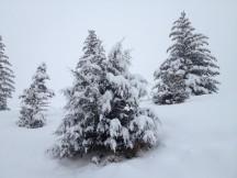 Snowy trees in Glenwood Springs