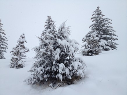 Snowy trees in Glenwood Springs
