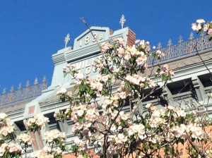 Old Town Fort Collins in bloom.