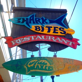 Shark Bites in Coos Bay, Oregon