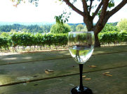 Springhill Winery