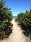 Trail to beach at Oceanside