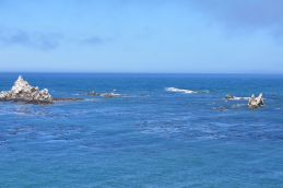 The view from Cape Arago
