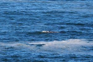 Whale watching at Depoe Bay