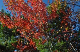 Colors at Acadia National Park