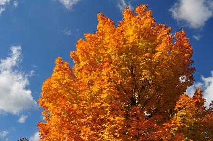 Colors at Jordan House in Acadia