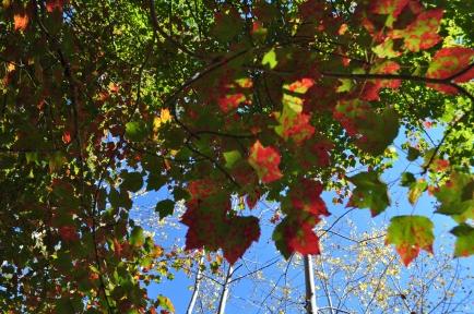 Pretty leaves at Acadia