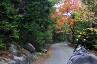 Carriage Ride at Acadia National Park