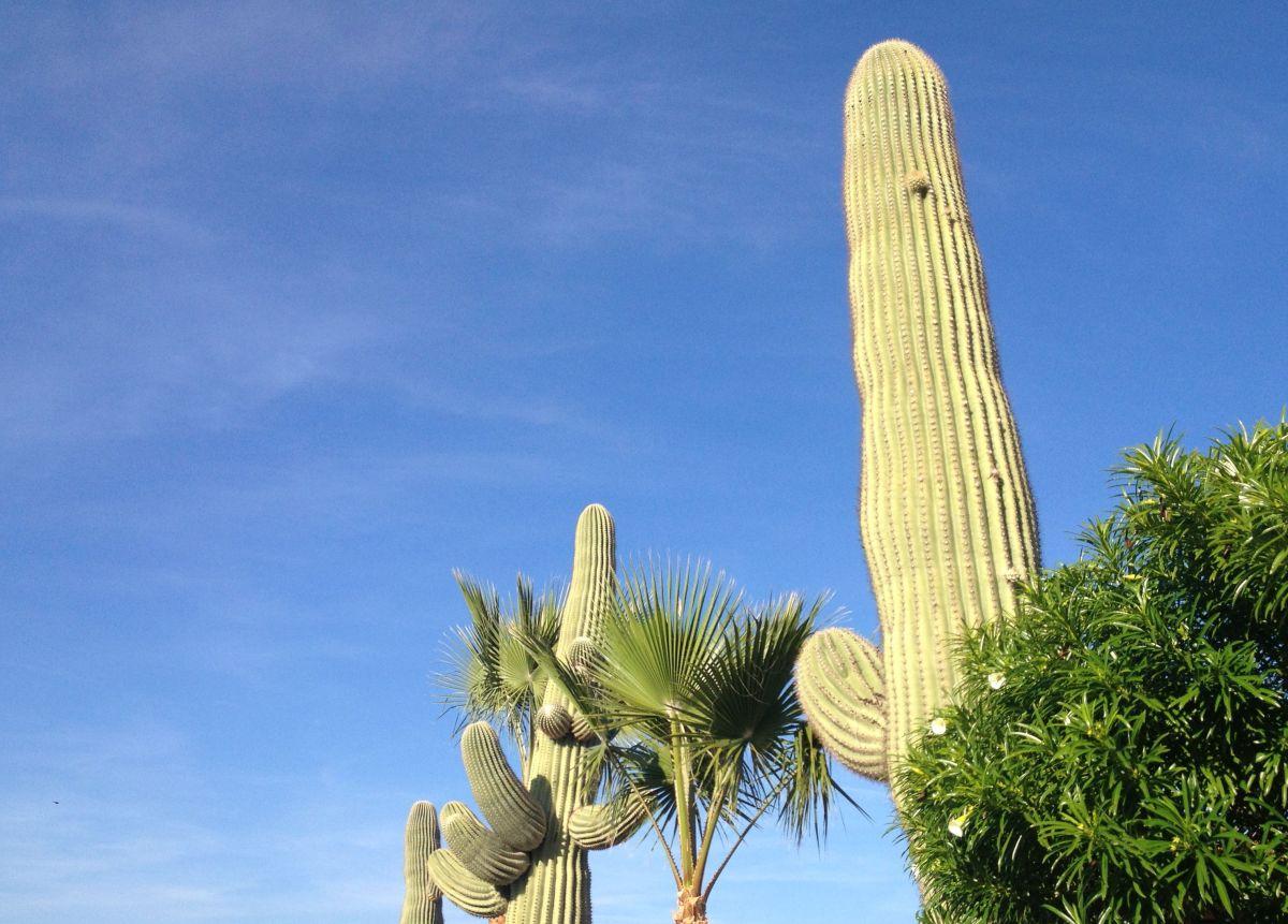 Blue sky and cacti in San Tan Valley Arizona