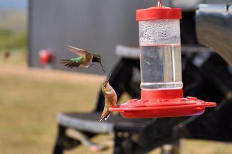 Hummingbird wars at Taylor Park