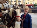 Scarf-eating horse in Killarney